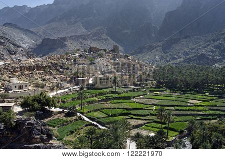 The village Bilad Sayt sultanate Oman with green terraces poster