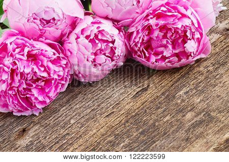 fresh pink  peony flowes border  on wooden background