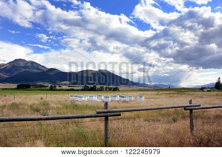 Paradise Valley farmers utilize dormant field by beekeeping. Wooden boxes group together in open field with Absaroka Mountains in background.