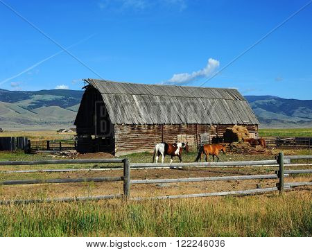 Rustic wooden barnsits inside a wooden padock. Horses head to barn for daily alotment of hay. Blue Montana sky frames agricultural scene.
