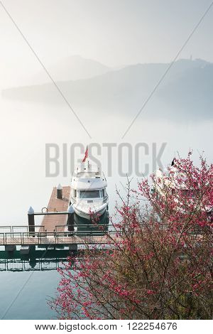 Tourist boats docking in peachful morning with cherry blossom flower at Sun Moon Lake Taiwan.