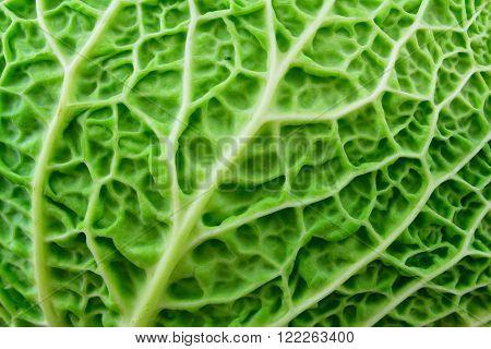 A closeup of a green leaf savoy