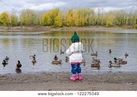 Girl feeding ducks on a river bank in autumn