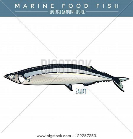 Saury illustration. Marine food fish, editable gradient vector