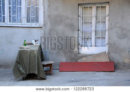 TBILISI, GEORGIA - JUNE 13, 2015: Cat on the table in the courtyard in the historical center of the city