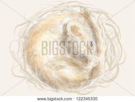 Edible dormouse. animal sleeping in a nest