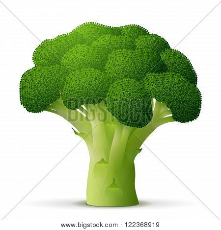 Green flower head of broccoli close up. Broccoli cabbage sprout isolated on white background. Qualitative vector illustration for agriculture food service cooking gastronomy olericulture etc. It has transparency blending modes masks gradients