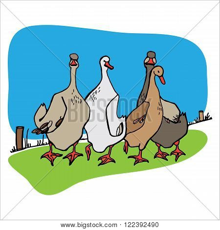 Four geese on the walk. Abstract vector illustration.