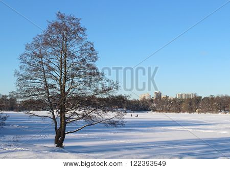 Tree over the fild in the winter countryside