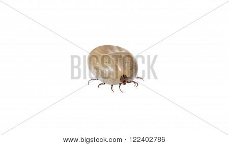 a tick on white background in studio
