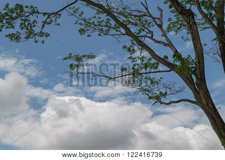 this a photo of Big tree on sky background