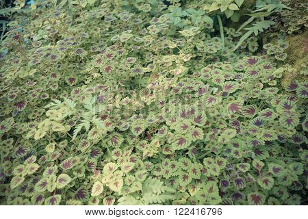 Moss plant green tree background surface natural color