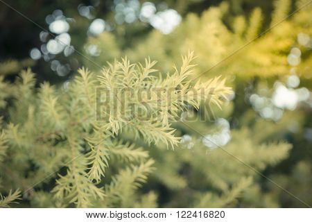 Plant green tree background surface natural color with bokeh