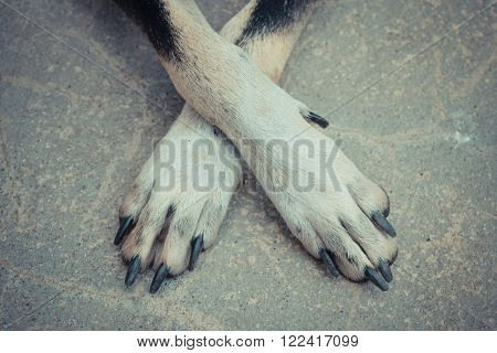 Crossing the cute dog's legs on the floor