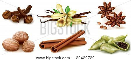 Different spices set on white background. Vector Illustration