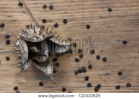 Dry flower datura seeds on the background of wooden boards
