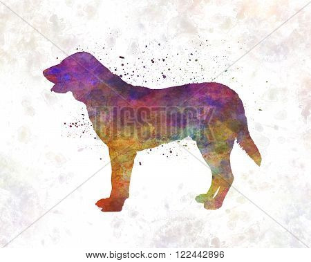Castro Laboreiro Dog in artistic abstract watercolor background