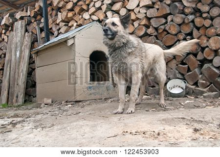 sheep dog is in a house. Close up