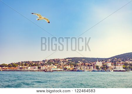 seagull flying over Modern buildings and beach with Cliffs in Kas village, Turkey