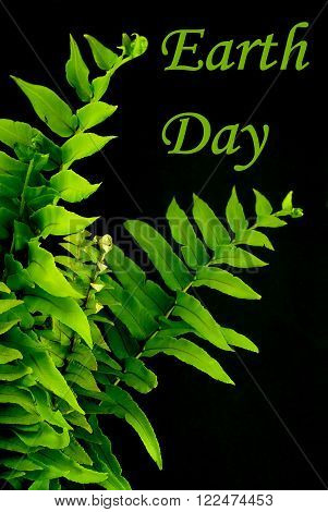 Detail of green ferns on black background for Earth Day in April