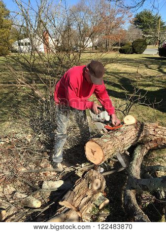 Man with a chain saw cutting up a fallen tree limb for firewood poster