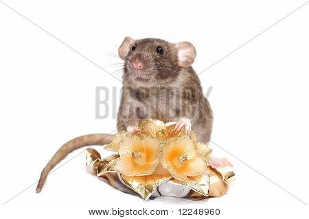Smell broun rat with candle flowers