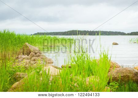 Green bulrush in a quiet Bay of the Finnish Gulf. Area for summer camping in the woods. Hamina, Finland, Suomi