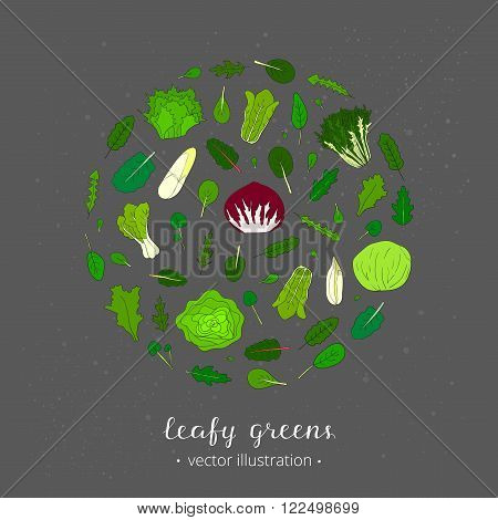 Hand drawn popular types of salad. Leafy greens vegetables in circle. Dandelion, collards, iceberg, arugula, spinach, tango, radicchio, romaine lettuce, corn, frisee, mache, mizuna kale, watercress.