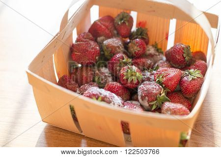 close up on Punnet of rotten strawberries