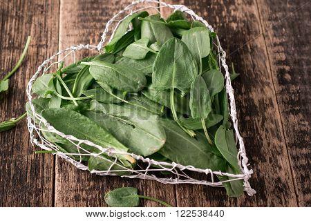 Fresh Organic Sorrel On Table. Healthy Food