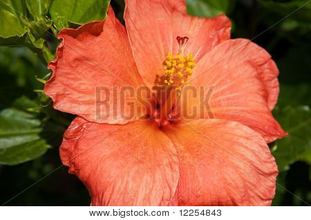 Blooming orange flower