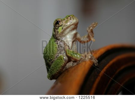 Tree Frog Waving