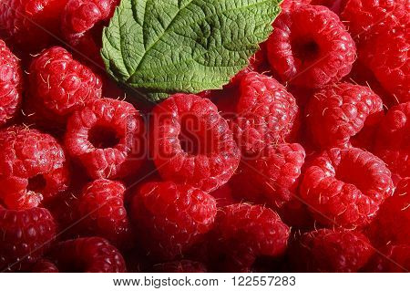 Fresh ripe healthy raspberries with leaf in a basket