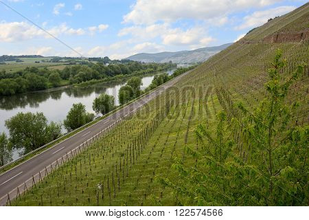 Vineyard On The Hillside Of Moselle River