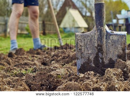 Spring planting of vegetables. Young man is digging the ground at garden using a spade