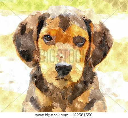 Abstract watercolor digital generated painting of the Beagle dog puppy. Beagel dog portrait dog painting.