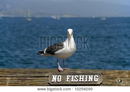 Seagull Next To A No Fishing Sign