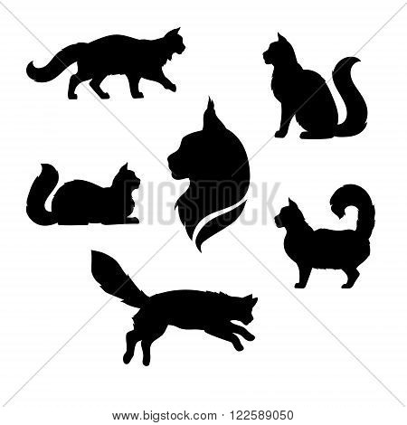 Maine Coon cat icons and silhouettes. Jumping running sitting lying standing going cat. Set of vector black and white pets. Animals outlines. Tattoo art. Isolated fluffy kitten. Cat posing.