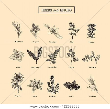 Herbs and spices / herbs and spices art / herbs and spices EPS / Herbs and Wild Flowers / Botany herbs and spices 15 Set / Vintage herbs and spices flowers / Herbs and spices black and white