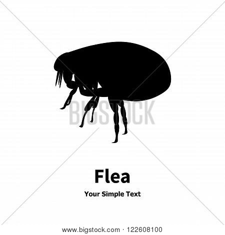 Vector illustration of black fleas. Isolated silhouette on a white background.