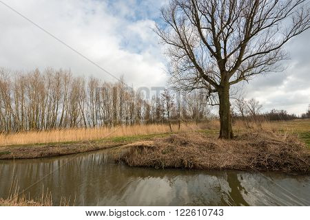 Bare tree on the bank of a small creek in the Netherlands. The sky is overcast and the colors are autumnal but spring has just begun.