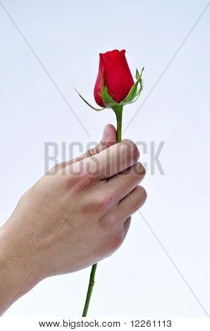 Giving a rose.