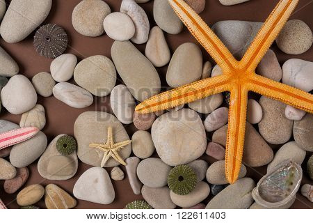 background with seashells and starfish and pebble