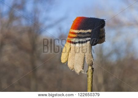 Lost Knitted Child's Glove or Mitten Hanging on a Bush Branch