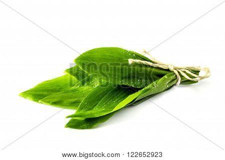 Wild garlic leaves isolated on white background