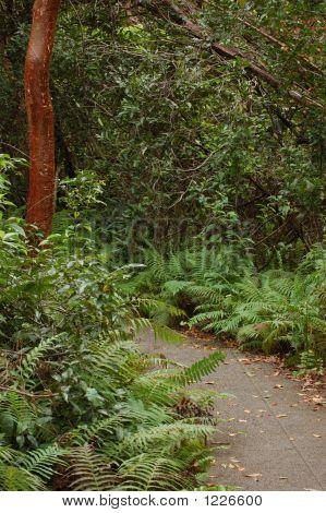 Gumbo Limbo Trail