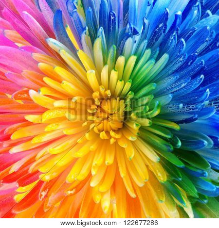 Colorful rainbow flower brackground