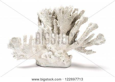 A White Ornamental Coral Over A White Background