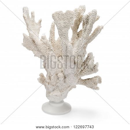 Tall, White Coral On Stand Over White Background