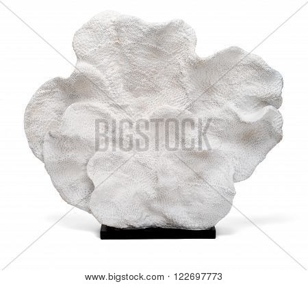 Coral Flower Trinket On A White Background